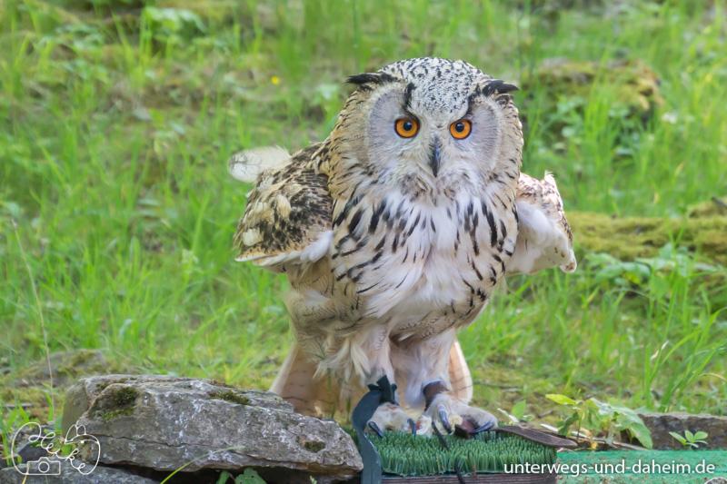 Elchbaby im Wildpark Bad Mergentheim besucht