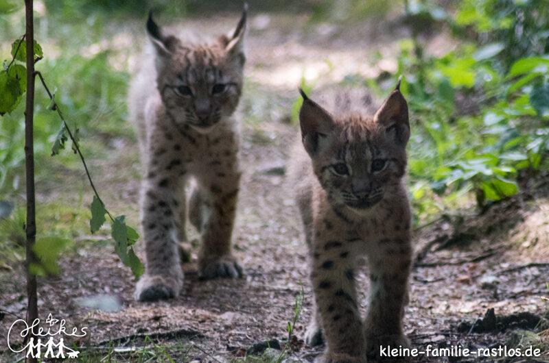 Unser Ausflug in den Bayerwald-Tierpark